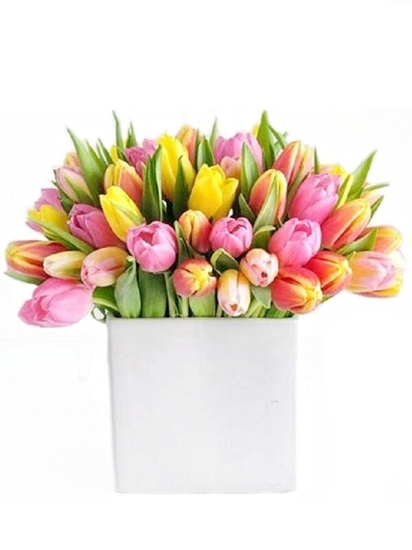 Lillekimp värvilised tulbid